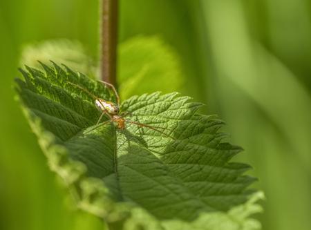 filigree spider on gren leaf in sunny ambiance