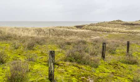 overgrown coastal scenery at the North Sea near Domburg in Walcheren in the dutch province of Zeeland