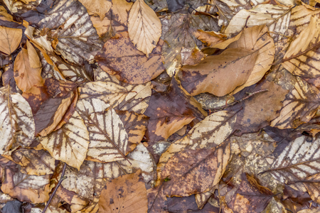 natural scenery showing brown autumn leaves seen from above