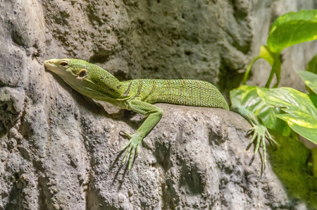 a green lizard on rock formation