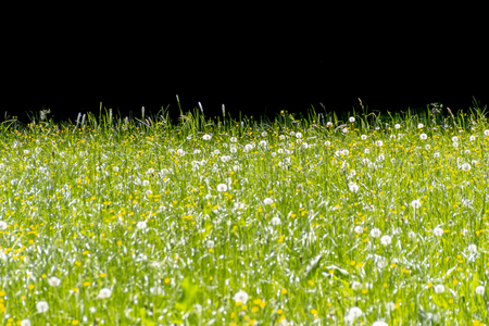 sunny flowery meadow at spring time in front of black back Stock Photo