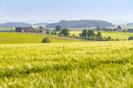 rural agricultural scenery with crop field at spring time in Hohenlohe, a district in Southern Germany