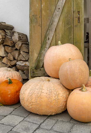 Various pumpkins in rustic ambiance at autumn time Standard-Bild