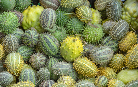 Full frame background showing lots of prickly cucumber fruits