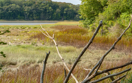 Riparian scenery around Yarmouth in Cumberland County in Maine, USA
