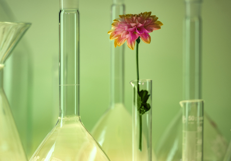 Detail shot showing a variety of laboratory glassware including a flower head in green ambiance Standard-Bild - 115382111