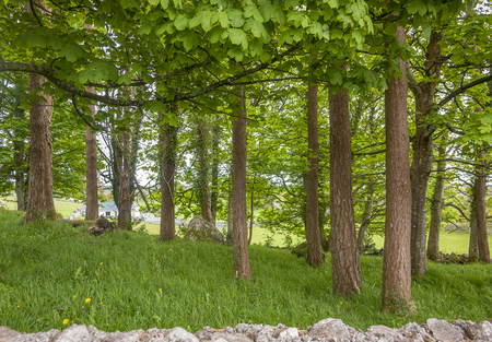 Park scenery showing a stone wall and trees seen in Ireland Standard-Bild - 115382062