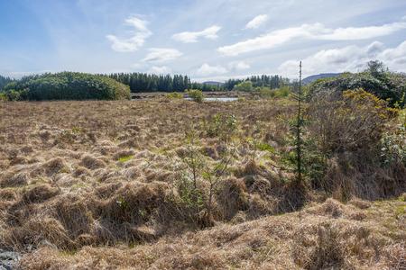 Wetland scenery around Connemara, a region in western Ireland Standard-Bild - 115382073
