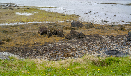 Idyllic coastal scenery around Sky Road in Connemara, a region in western Ireland Standard-Bild - 115382075