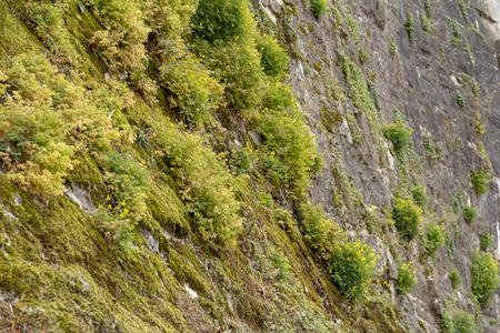 Mossy overgrown historic stone wall closeup Standard-Bild - 115381839