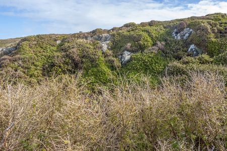 Coastal vegetation scenery around Sky Road in Connemara, a region in western Ireland Standard-Bild - 115381843