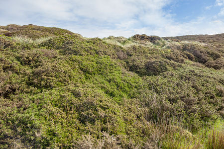 Coastal vegetation around Sky Road in Connemara, a region in western Ireland