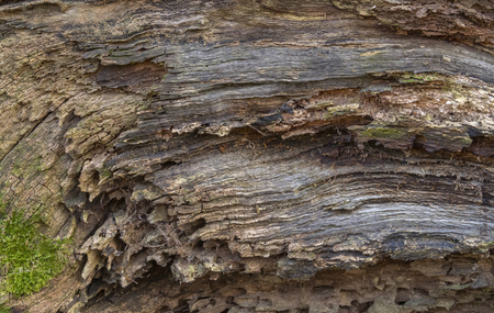 Full frame abstract rotting wood detail