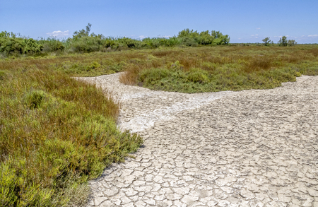 Sunny scenery in a natural region named Camargue in southern France