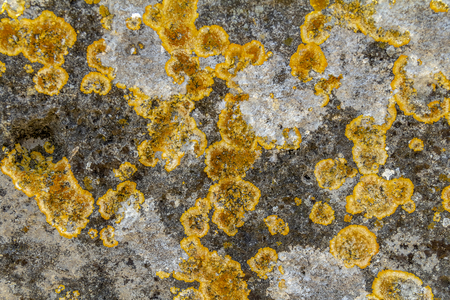 full frame abstract lichen closeup Reklamní fotografie