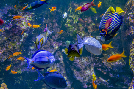 scenario acquatico che mostra molti pesci colorati della barriera corallina