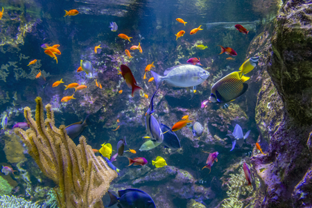 aquatic scenery showing lots of colorful reef fishes