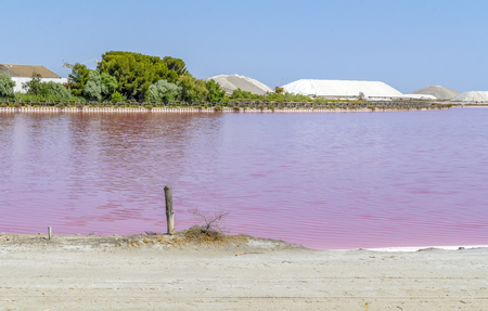 Salt works scenery in the Camargue area in southern France with pink salt evaporation pond in sunny ambiance