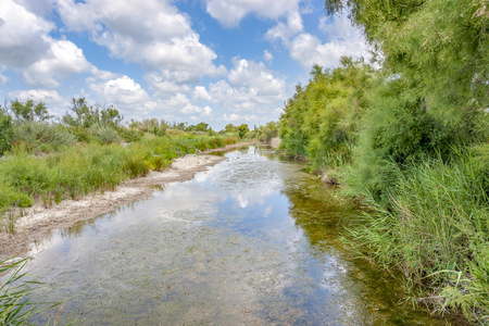 Riparian scenery around the Regional Nature Park of the Camargue in Southern France