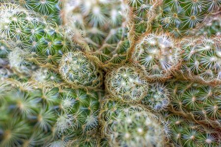 full frame cactus closeup shot 写真素材