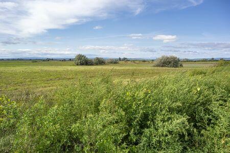 idyllic rural scenery around Illmitz in a area named Burgenland in Austria Zdjęcie Seryjne