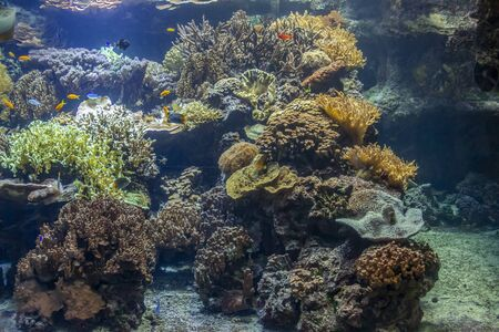 submerge coral reef scenery including lots of colorful fishes