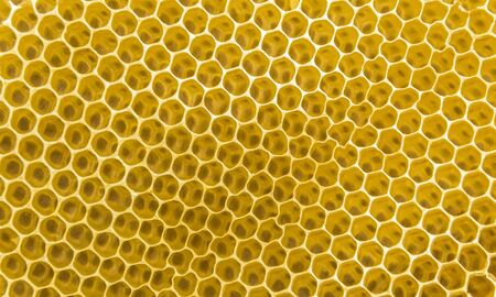 full frame yellow honeycombs background