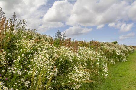flourish vegetation closeup seen near Carolinensiel in Eastern Frisia, Germany