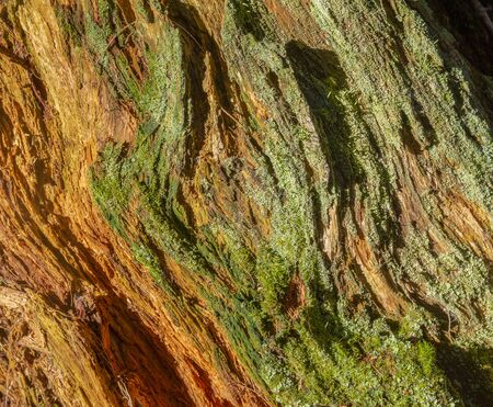 full frame abstract weathered wood closeup