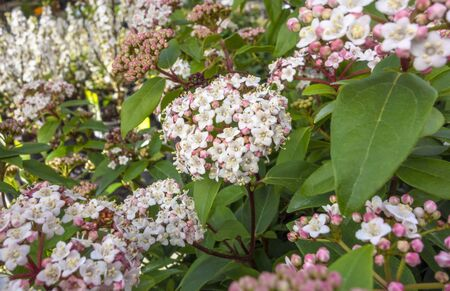 full frame closeup shot of some reddish and white flowers