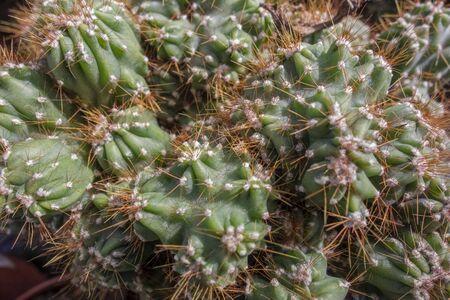 full frame closeup shot of a spiky cactus Stock Photo