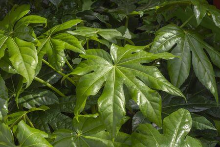 full frame paperplant leaves background