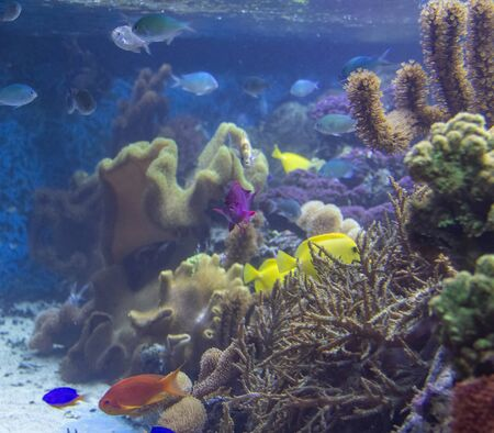colorful coral reef scenery with lots of different corals, sea anemones and fishes