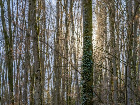 mystic illuminated forest scenery at early spring time