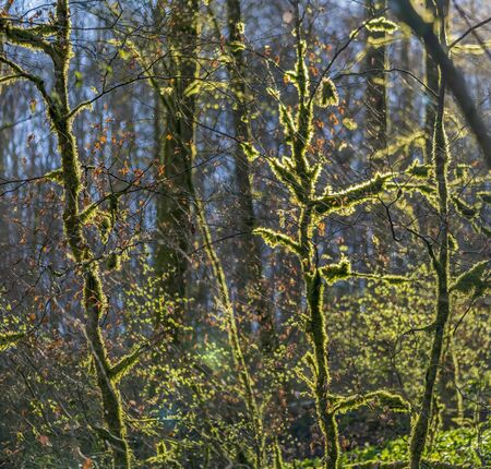 sunny illuminated natural forest scenery at early spring time