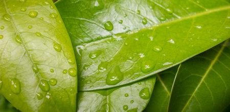 full frame closeup shot of some green fresh wet leaves