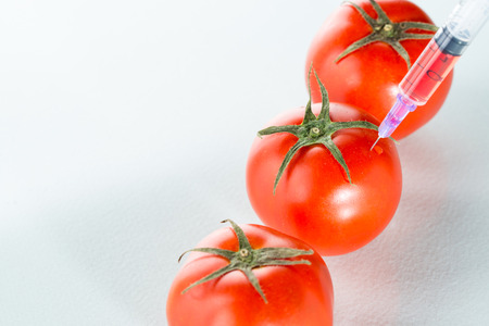 food science: Genetically modified food science of inject tomato Stock Photo