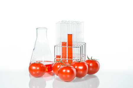 food science: Genetically modified food science plant vegetable test