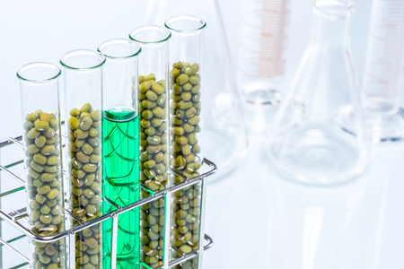 test tube holder: Genetically modified food science plant