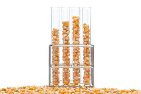 propylene: research corn in laboratory, biofuel and gmo Stock Photo