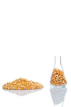 glycol: research corn in laboratory, biofuel and gmo Stock Photo
