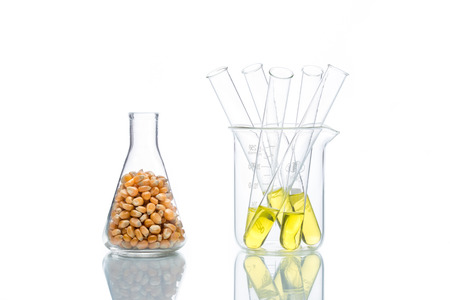 propylene: Research corn energy, biofuel and gmo in laboratory, yellow liquid in test tube Stock Photo