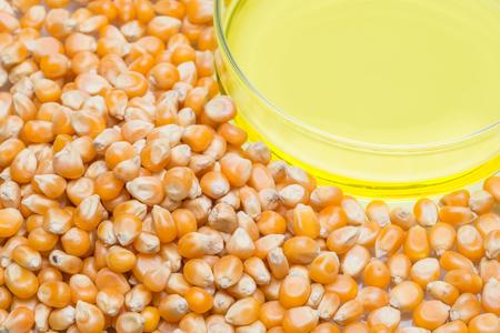 propylene: Research corn energy, biofuel and gmo in laboratory, yellow liquid in Petri Dish