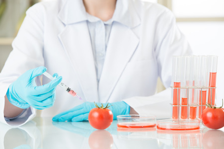 female scientist looking for gmo tomato dna for safety in laboratory
