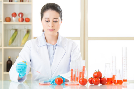 genetic food modification: tomato genetic modification food research need more test laboratory