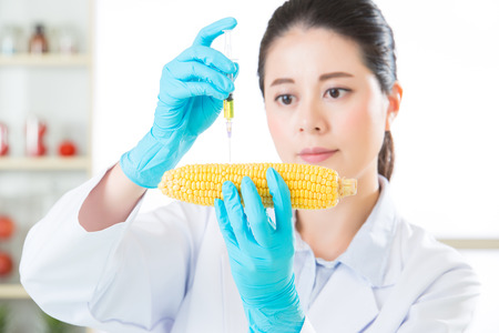 genetic food modification: genetic modification corn sugar are everywhere for food industry