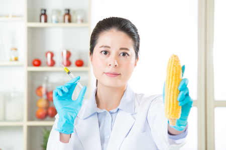 clue: you will find the clue in this gmo corn research Stock Photo