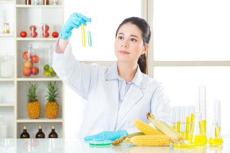 genetic food modification: genetic modification corn sugar is not sugar cane, all about gmo food Stock Photo