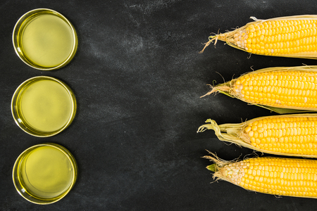 genetically modified gold corns and technology research and development edible oil on the blackboard showing gmo food concept with blank idea copyspace area in the studio.
