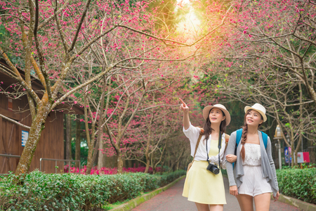 portrait of two young female friends walking on the sakura blossoming path looking and pointing copyspace beautiful view share for sister together strolling along a cherry flower trees. Stock Photo